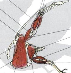 fjernelse af livmoder anatomi efter
